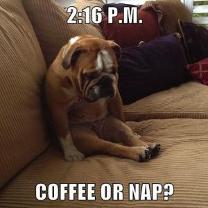 tired-bull-dog