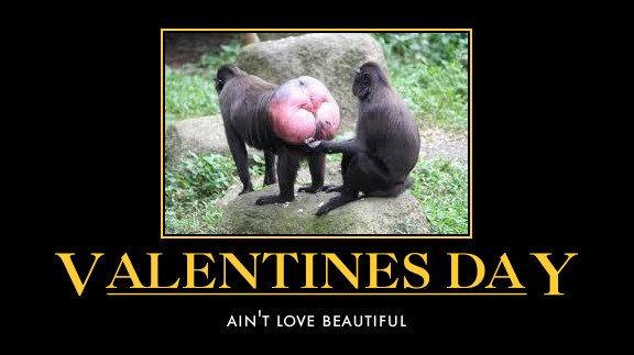 Funny Dirty Valentine Quotes : Funny Single Valentines Day Quotes Like  Success