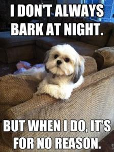 Dogs+Funny+Pics+with+Funny+Captions+(8)