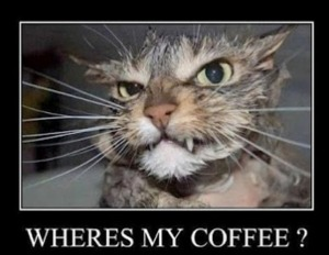 funny coffee cat