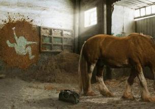 horse-shit-vet