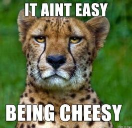 07-cheetah-pun