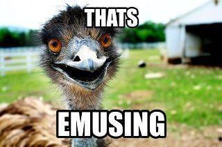bec9a3f082ad5708d48d8d274c022a82--animal-puns-funny-animal-memes