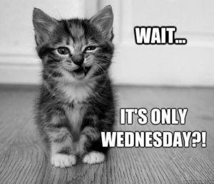 c0bd034f3aa5cc7d8e75ffdf5d763e35--funny-wednesday-memes-happy-birthday