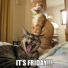 Its-friday-cats-meme-1