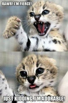 1ea425a48e33f2206378196b7a975a3f--funny-animal-quotes-cute-funny-animals