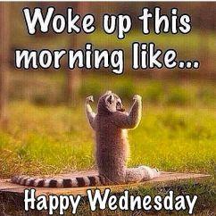 aa46f6603dab0102480714cba6ff5af8--wednesday-memes-wacky-wednesday