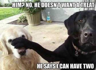 funny-dog-memes-7