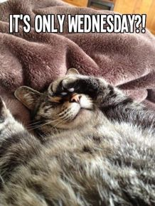 232440-Its-Only-Wednesday