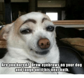 are-you-bored-draw-eyebrows-on-your-dog-and-laugh-7364917