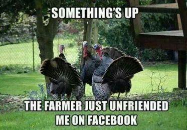 Thanksgiving-Turkey-Meme-2
