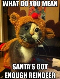 Best 25+ Funny Christmas Memes Ideas Only On Pinterest | Christmas regarding Funny Christmas Memes