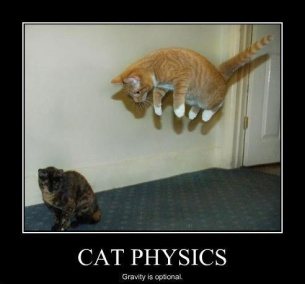 86cd192f2284eac34edb9faaba5c9649--funny-cat-pictures-funny-pics