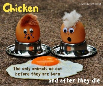 humor-funny-definitions-chicken-only-creatures-eaten-before-birth-and-after-death-cover-pic-640x537