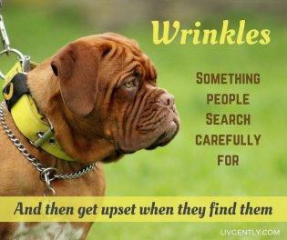 humor-funny-definitions-wrinkles-people-search-carefully-get-upset-when-find-them