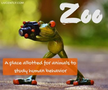 humor-funny-definitions-zoo-place-allotted-animals-study-human-behavior