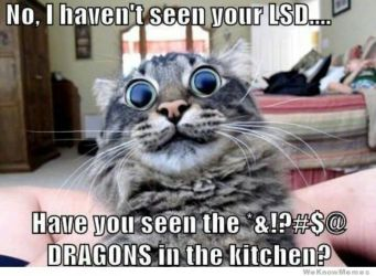 no-i-havent-see-your-lsd-have-you-seen-the-dragons-in-the-kitchen
