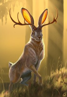 jackalope__2_by_intothebear-dacllqo