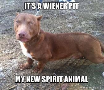 its-a-wiener-5ac6c6