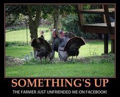 35005a5475e923b6e5bb73ada93c7a36--thanksgiving-meme-thoughts