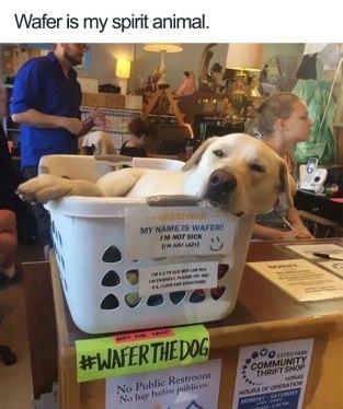 cute-wholesome-dog-puppie-memes-35-5907182c1c5e6__700
