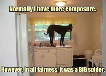 Funny-dog-in-the-kitchen