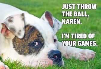 04-Hilarious-Dog-Memes-768x526